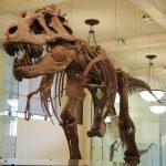 アメリカ自然史博物館の見どころを徹底的に紹介します!
