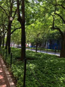 コロンビア大学の緑