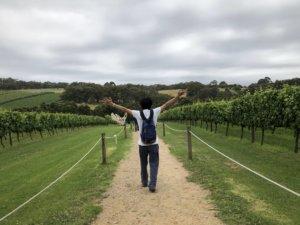 ブドウ畑をお散歩