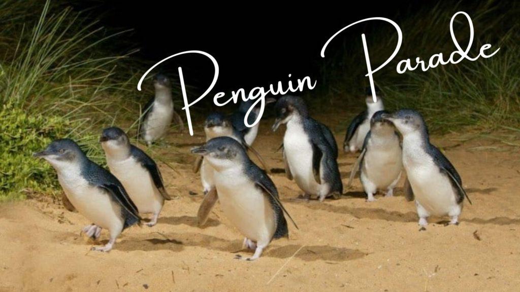 メルボルンのフィリップ島ペンギンパレード!おすすめの席や感想など徹底紹介【口コミ】