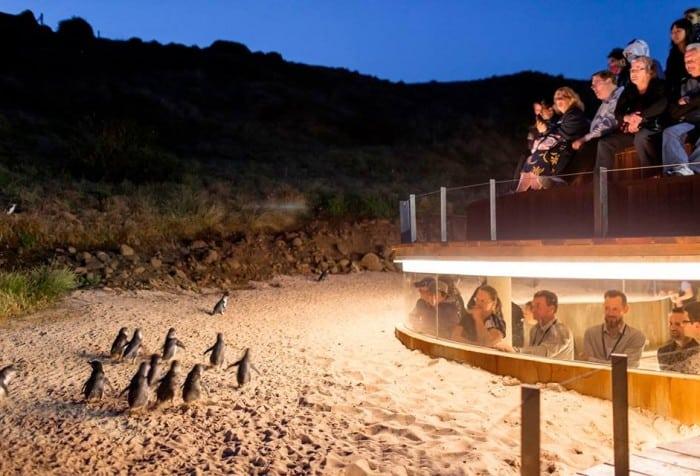 メルボルンのフィリップ島ペンギンパレードのUnderground Viewing(ペンギンと同じ目線で見れる)