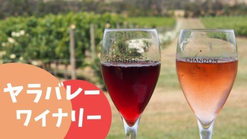 【口コミ】ヤラバレーツアーの体験レビュー!シャンドンのワインも飲める【メルボルンの郊外へ】